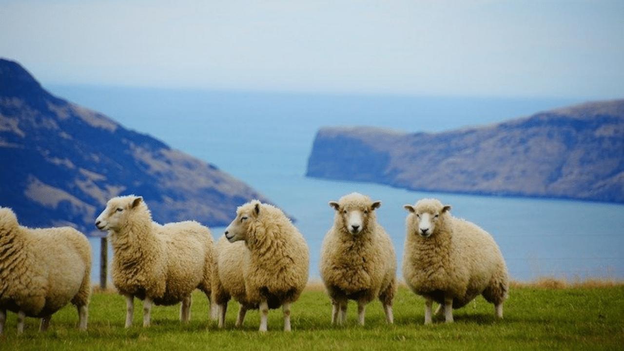 New Zealand Tenders - Now at Australian Tenders (1)