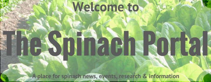 Vegetable Knowledge - Spinach Portal Takes You Places - Australian Tenders